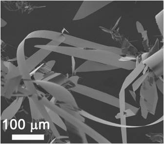 结构的纳米材料,有单壁管